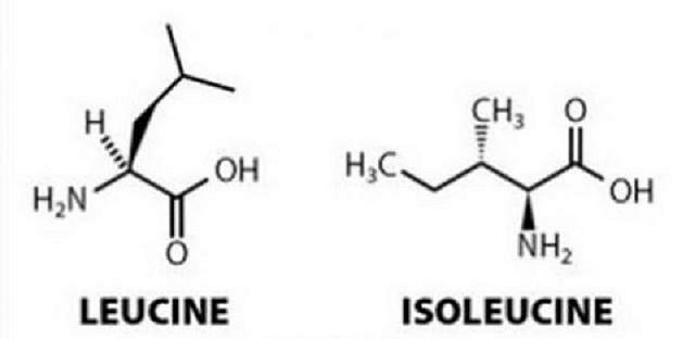 Bổ sung 2 acid amin cần thiết cho cơ thể