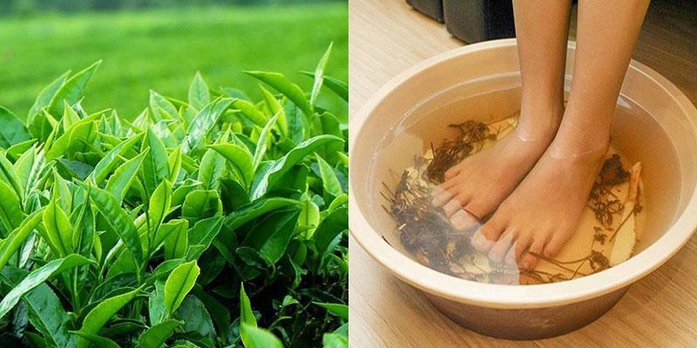 Lá chè xanh mang lại hiệu quả tốt trong điều trị bệnh gout